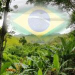 Brasilianischer Abend